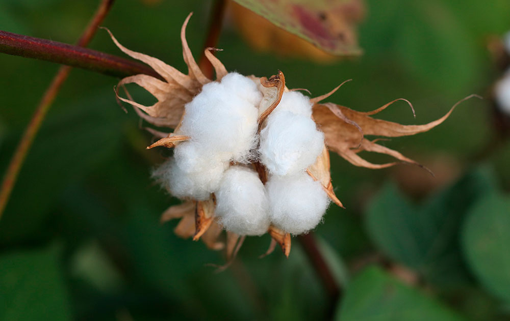 Sustainable Cotton Challenge